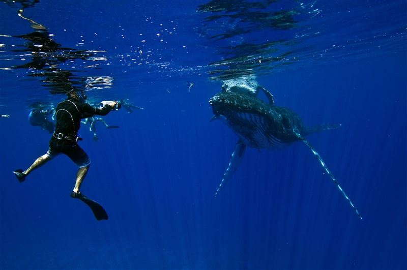 Diving In Tahiti And Her Islands