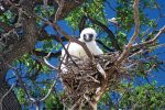 640x427Bird_Nest_0691_preview
