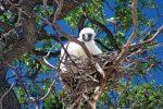 640x427Bird_Nest_0691_preview