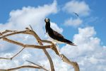 640x427Bird_tmana-fauna15_preview (1)